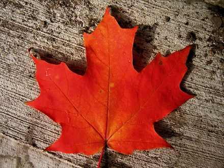 Кленовый лист.
